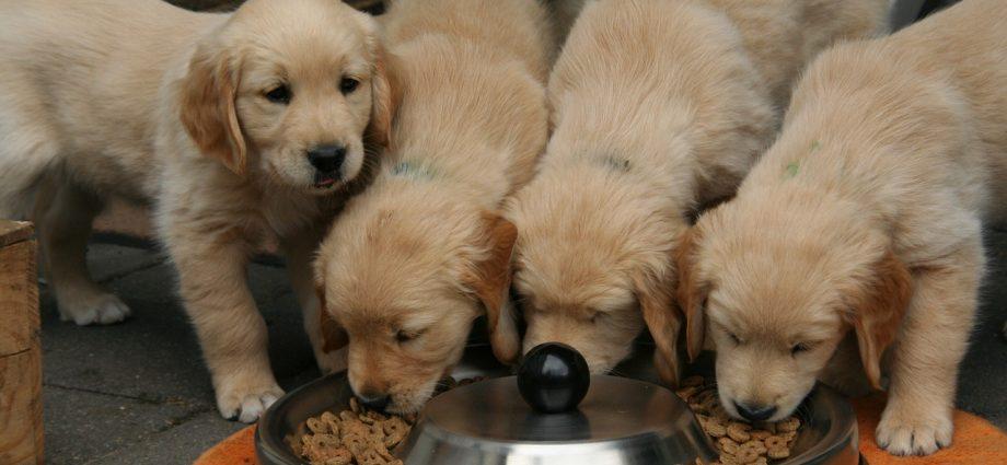 O karmieniu psów słów kilka